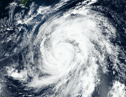 [IMPORTANT NEWS] SALON CLOSED DUE TO TYPHOON 19